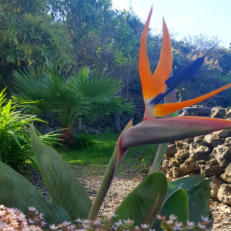 Primavera Peqa